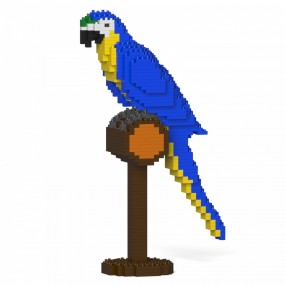 Blue-and-Gold Macaw S03