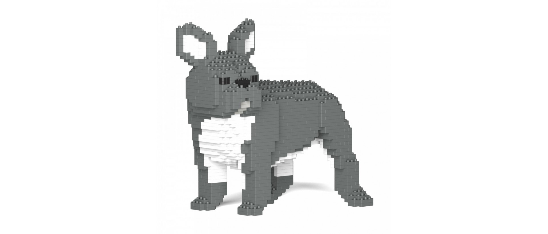 French Bulldog S03-M05