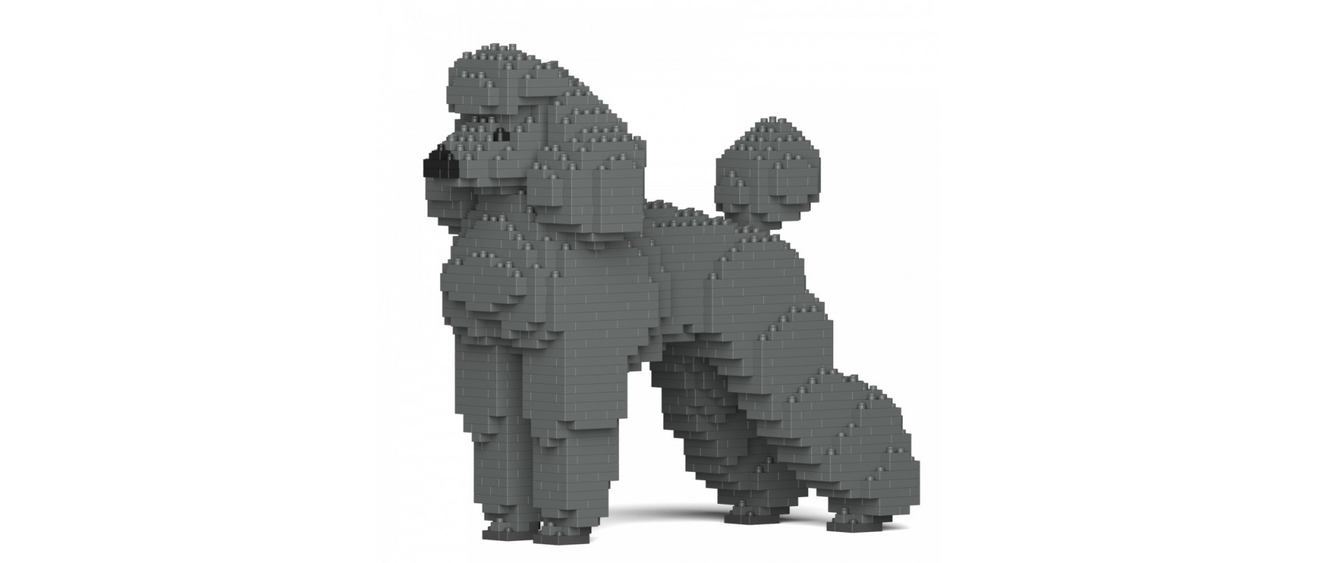 Standard Poodle S04-M03