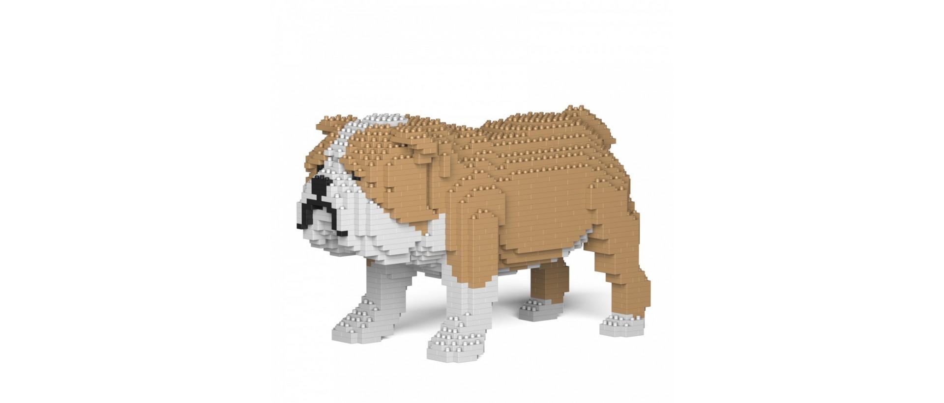 English Bulldog C17-M03